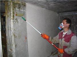 Как избавиться от грибка в подвале